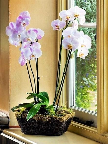 Orchidea 6 Consigli Su Come Curarla